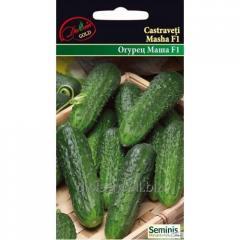 Seeds Of Gold Cucumber Masha F1