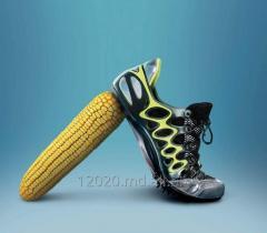 Семена кукуруза в Молдове