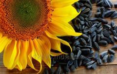 Семена подсолнечника в Молдове
