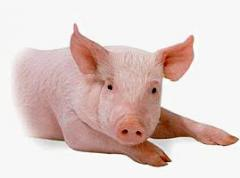 Veterinary medicine for pigs
