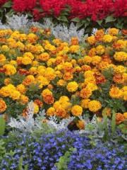 Посадочный материал овощных и цветочных культур