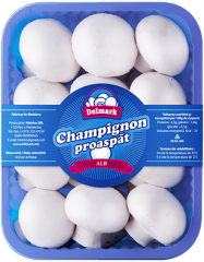 "Champignons fresh ""White"