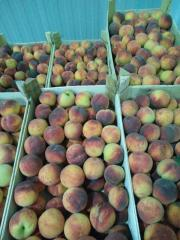 Peach for processing