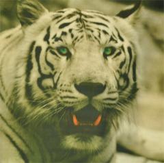 Ткань Petek white tiger