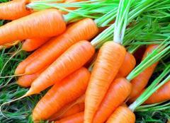 Морковь на экспорт
