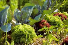 Биоудобрения для овощей в Молдове
