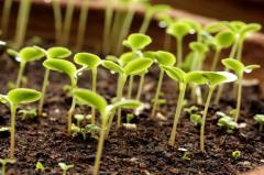 Стимуляторы роста растений в Молдове
