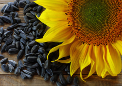 Sunflower seeds in Moldova and for export