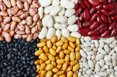 Beans in Moldova and for export