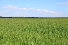 Препараты для обработки семян, Биопрепараты для