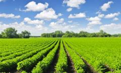 Биопрепараты для кукурузы,  горoха , сои и...