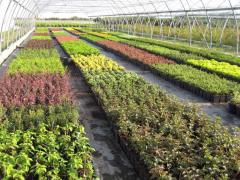 Biologicals voor planten