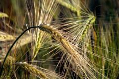 Стимулатори за растеж на растения