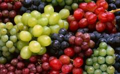 Виноград белый и черный