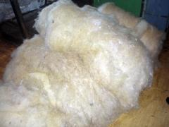 WE BUY SHEEP WOOL