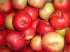 Яблоко зимних сортов
