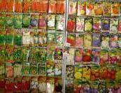 Seeds of green vegetables