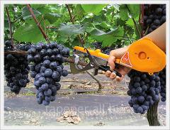 The tool for a vineyard garter