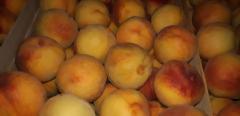 Piersici - персики