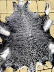 Karakul. Persianer Fell. Fur.