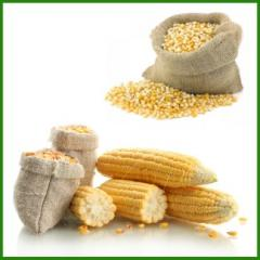 Wholesale delivery of maize