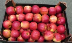Яблоки на экспорт, mere pentru export