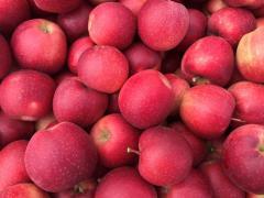 Яблоки на экспорт от компании Megavita, SRL