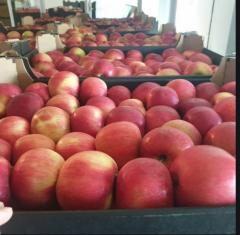 Apples for export!