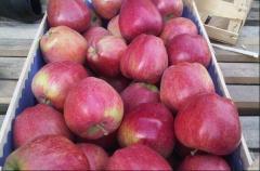 Яблоки на экспорт сорт Супер Чиф
