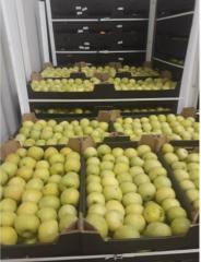 Яблоки на экспорт сорт Голден