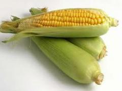 Кукуруза в Молдове