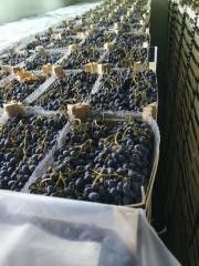 We sell grapes Moldova for export