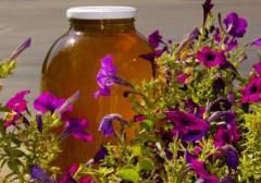 Мед из цветов акации