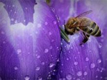 Honey flower - cream