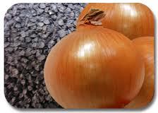 Onions seeds Chalcedony