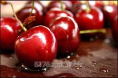 Sweet cherry for expor