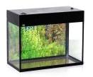 Aquariums are rectangular
