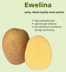 Evelyn's potatoes