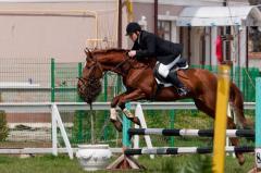 Конкурные лошади