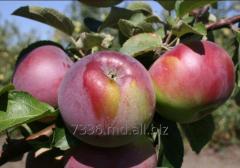 Florin apples
