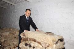 Skin sheep in Moldova for Expor