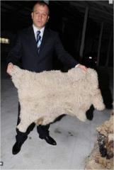 Шкура овечья,Экспорт шкур,Экспорт шерсти,Экспорт
