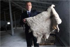 Шкура овечья