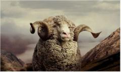 Шкура овечья в Молдове на Экспорт