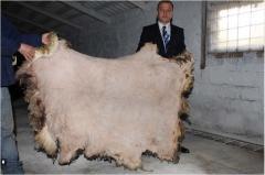 Сырье кожевенное в Молдове на Экспорт