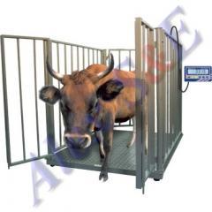 Весы электронные для взвешивания скота BX-2D1,3-2