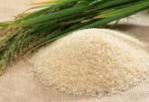 Рис сырец