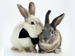 Premixes for rabbits, nutrias of Premixuri pentru