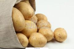 Картофель среднепоздний Дамарис