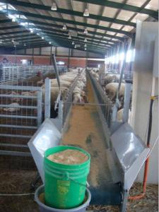 Sheep feeders